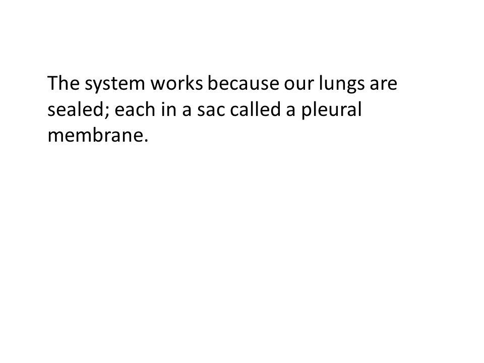 The system works because our lungs are sealed; each in a sac called a pleural membrane.