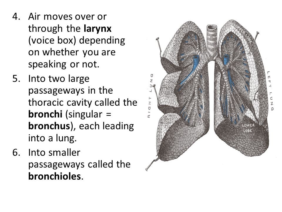 Air moves over or through the larynx (voice box) depending on whether you are speaking or not.
