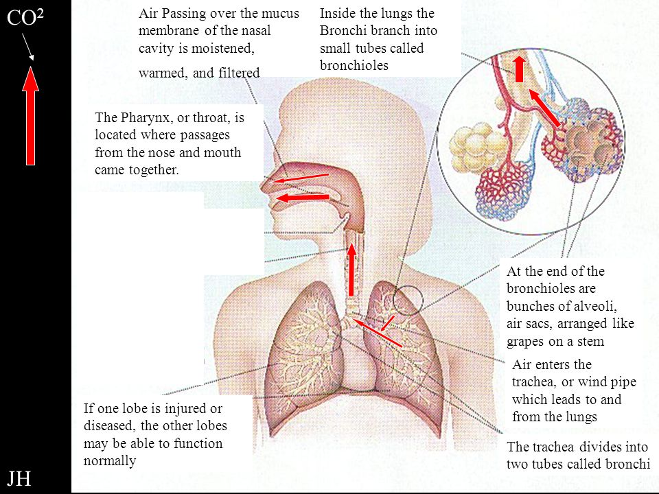 Respiratory Overview Review