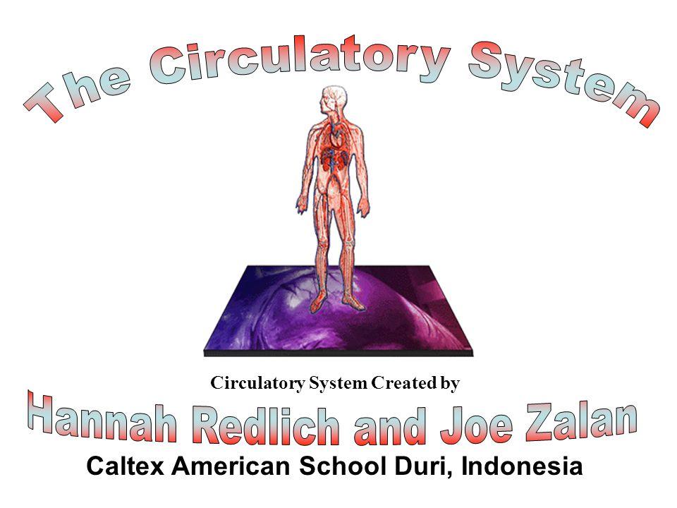 Title Page The Circulatory System Hannah Redlich and Joe Zalan
