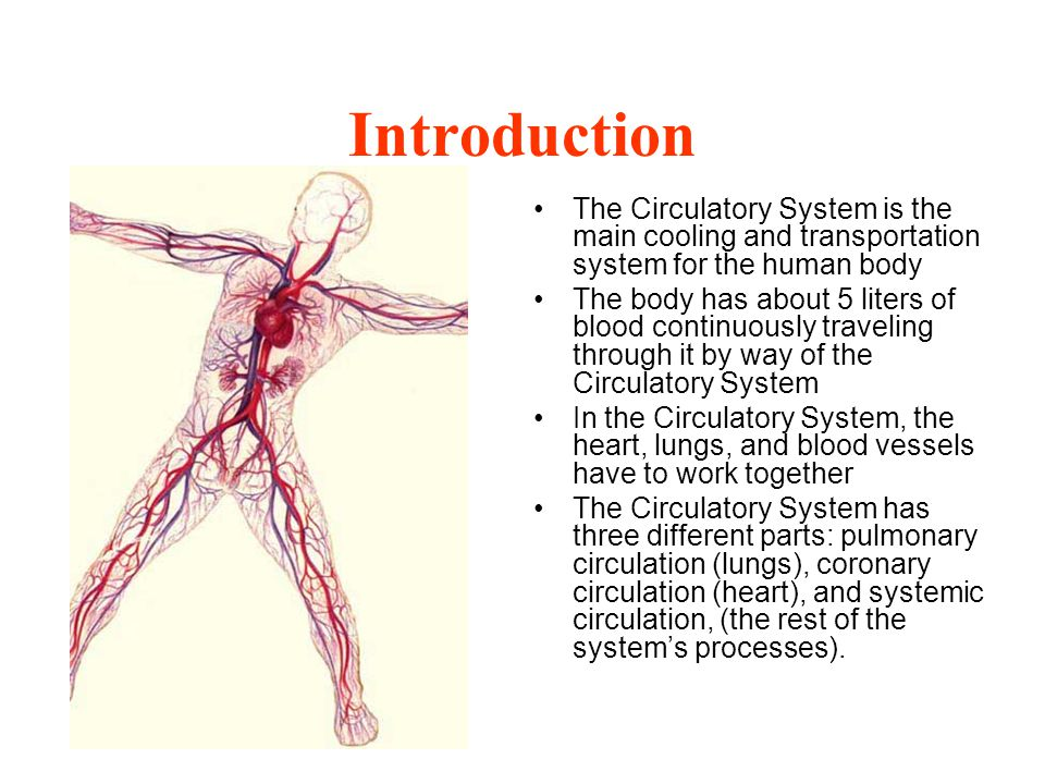 Introduction The Circulatory System is the main cooling and transportation system for the human body.
