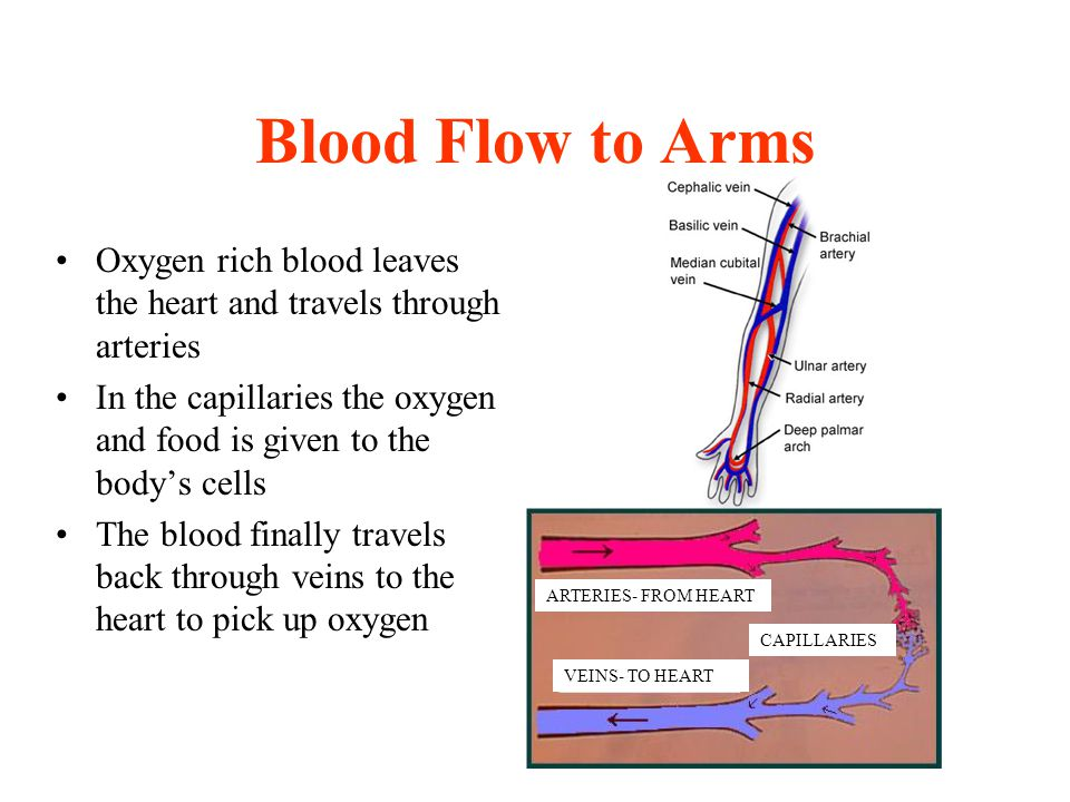Blood Flow to Arms Oxygen rich blood leaves the heart and travels through arteries.