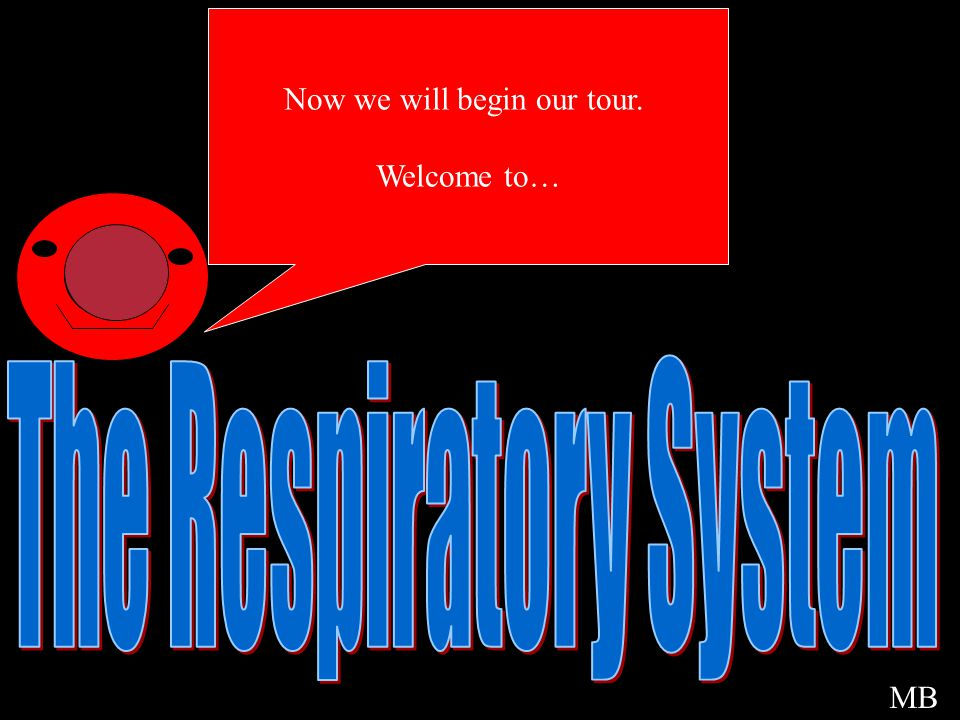 Welcome The Respiratory System Now we will begin our tour. Welcome to…