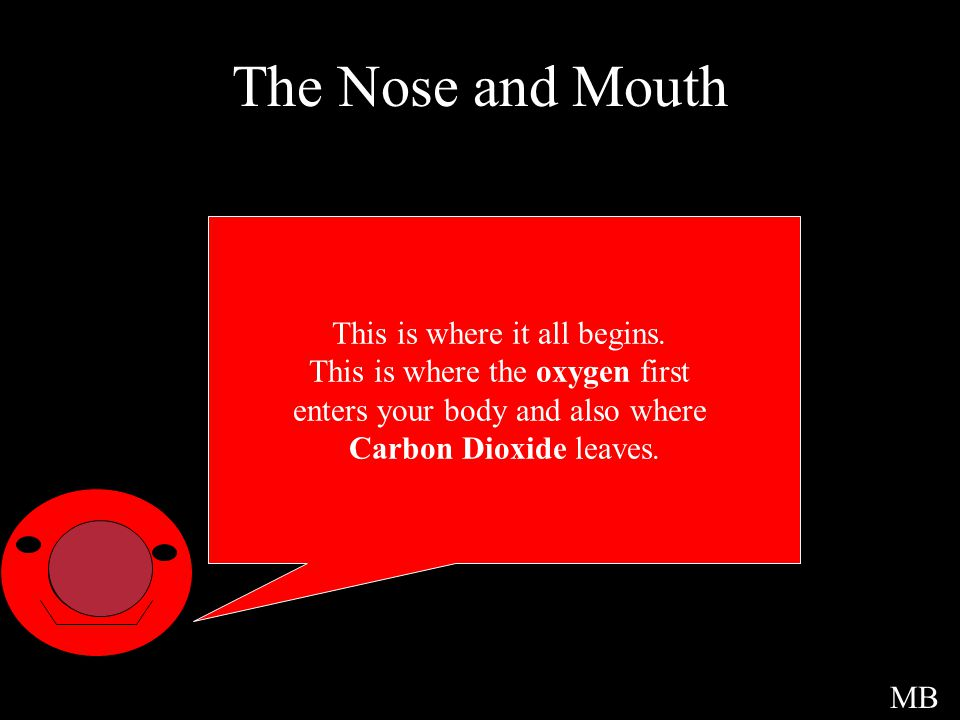 The Nose and Mouth This is where it all begins.