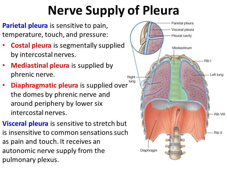 Nerve Supply of Pleura Parietal pleura is sensitive to pain, temperature, touch, and pressure: