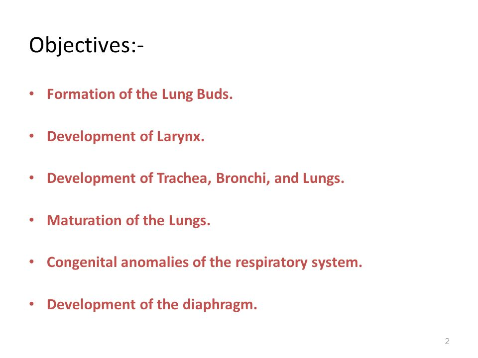Objectives:- Formation of the Lung Buds. Development of Larynx.
