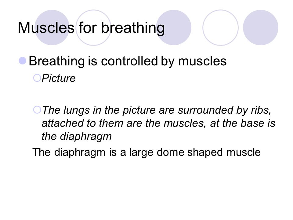 Muscles for breathing Breathing is controlled by muscles Picture