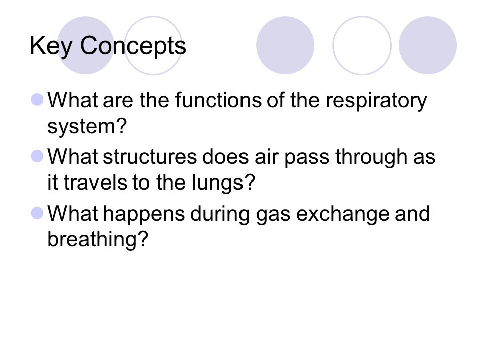 Key Concepts What are the functions of the respiratory system