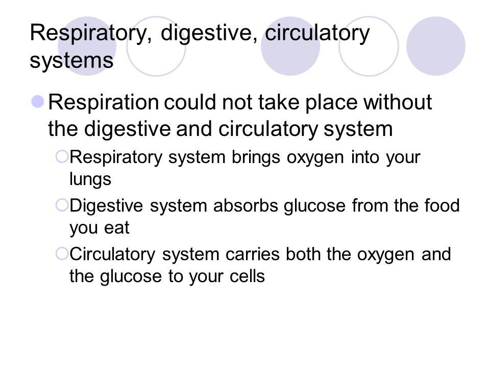 Respiratory, digestive, circulatory systems