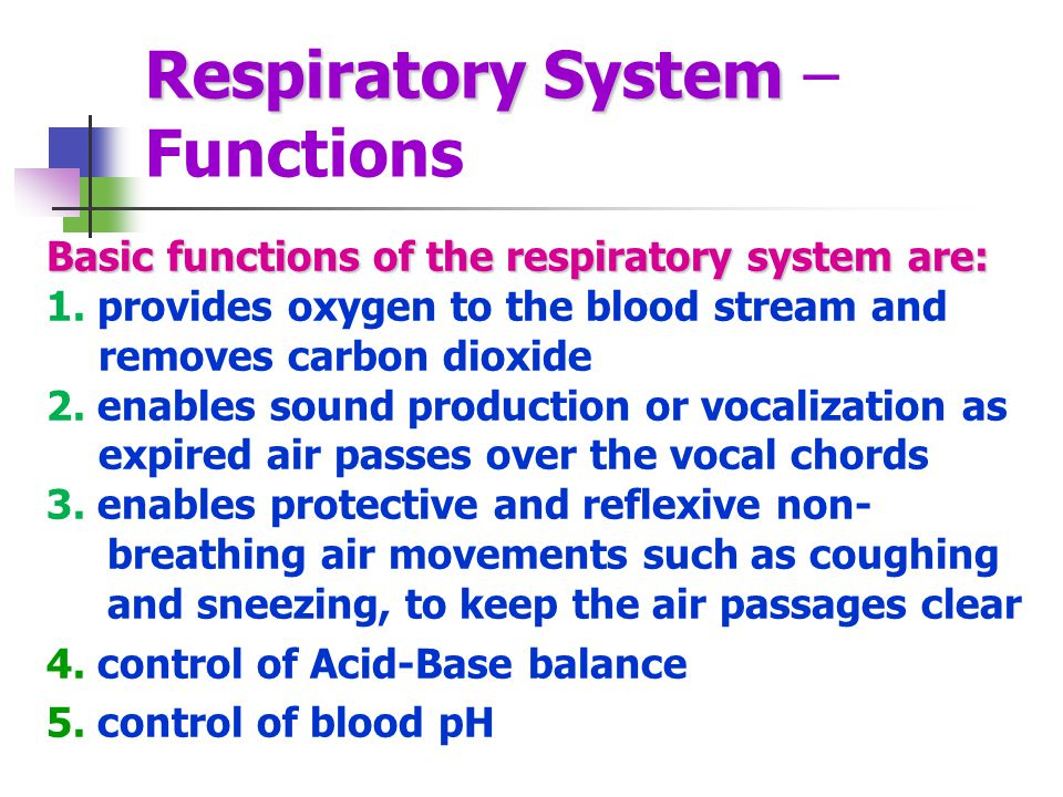 Respiratory System – Functions