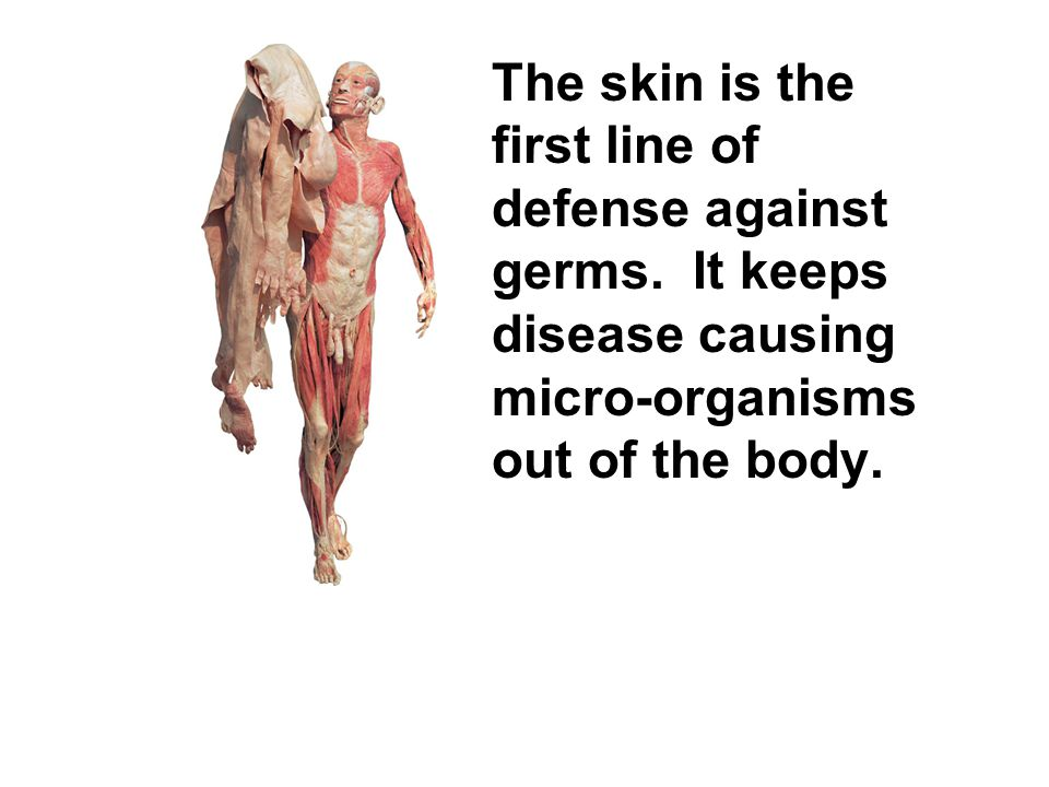 The skin is the first line of defense against germs