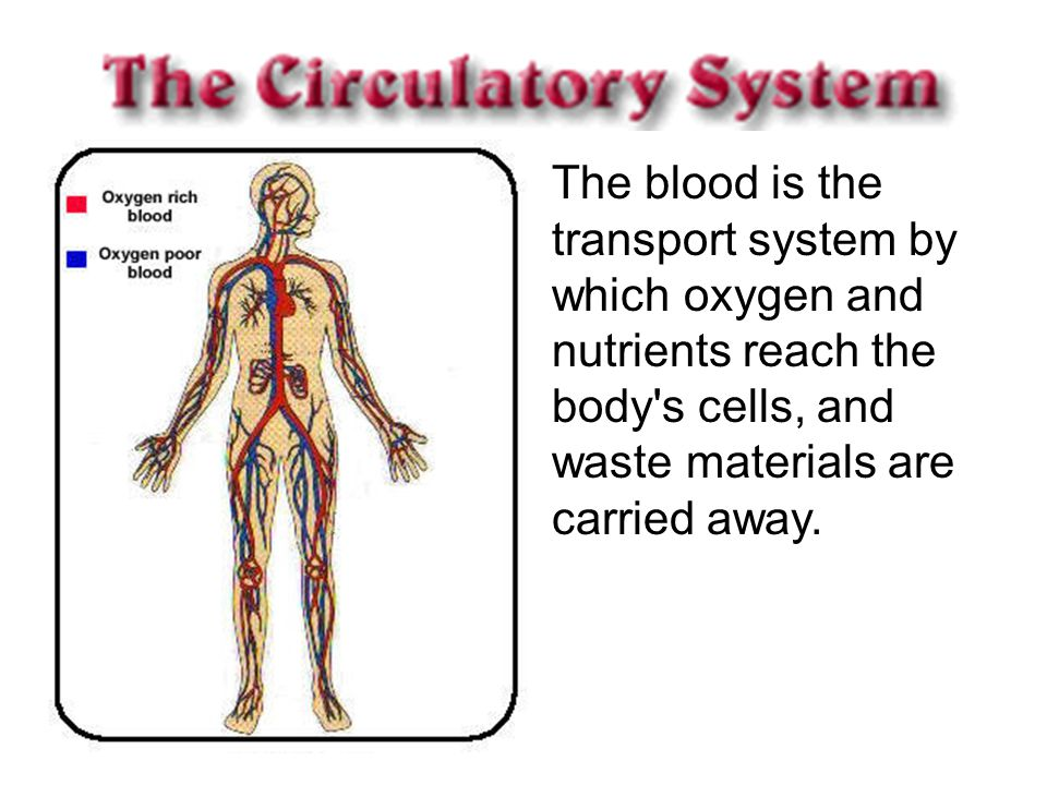 The blood is the transport system by which oxygen and nutrients reach the body s cells, and waste materials are carried away.