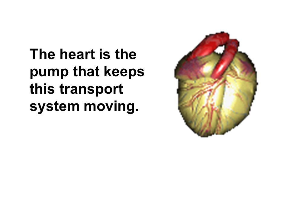 The heart is the pump that keeps this transport system moving.