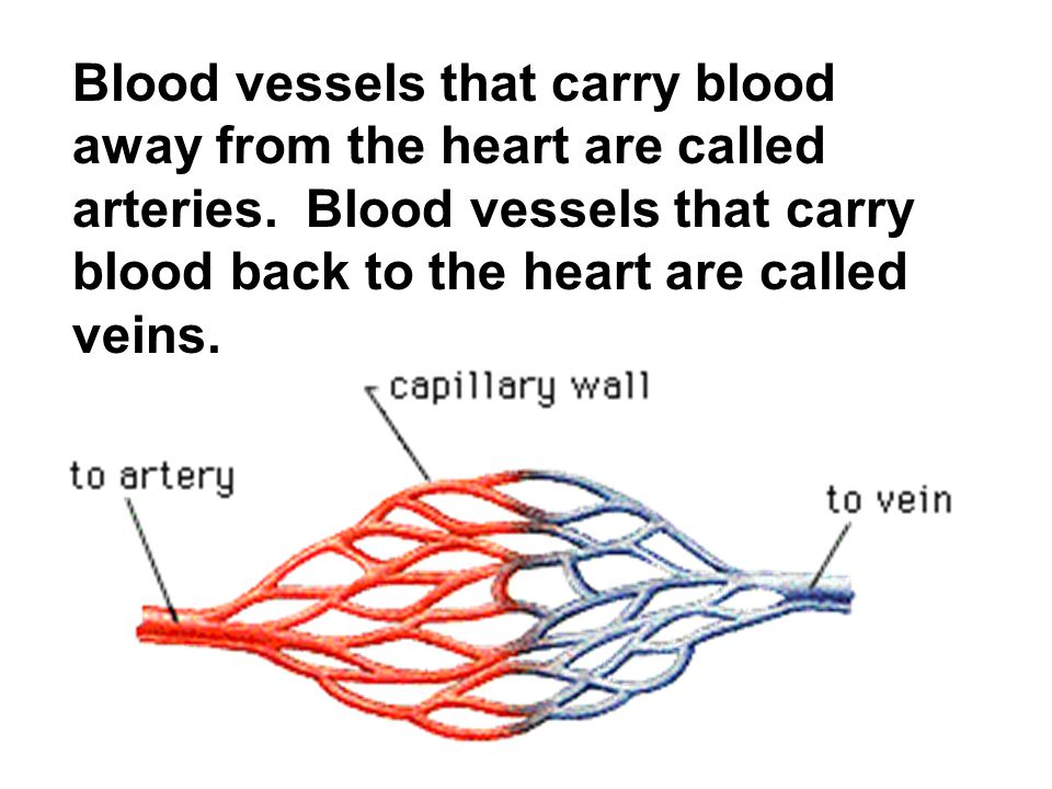 Blood vessels that carry blood away from the heart are called arteries
