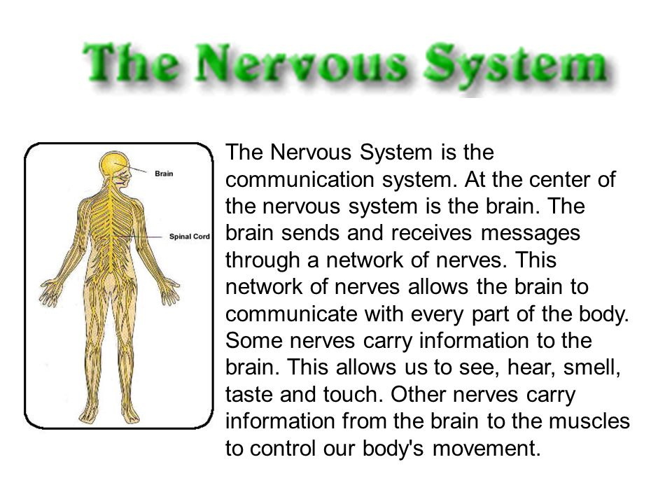 The Nervous System is the communication system