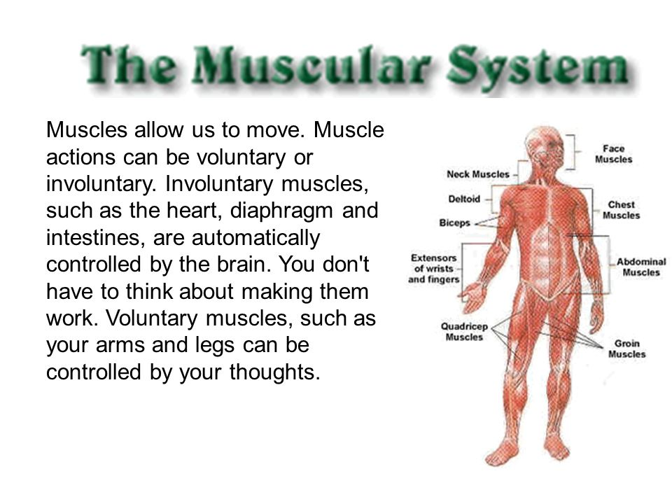 Muscles allow us to move