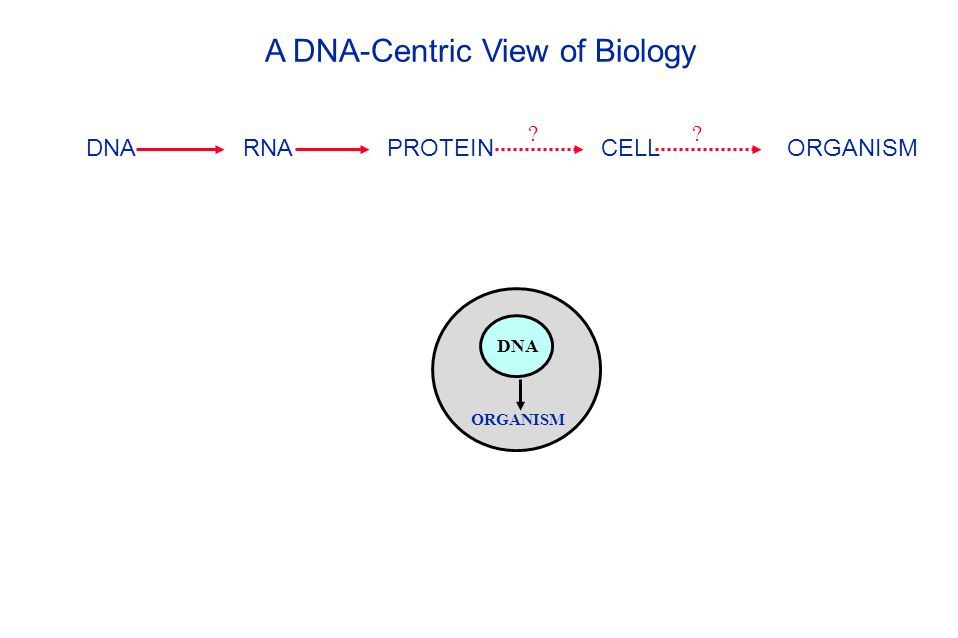 DNA RNA PROTEIN CELL ORGANISM