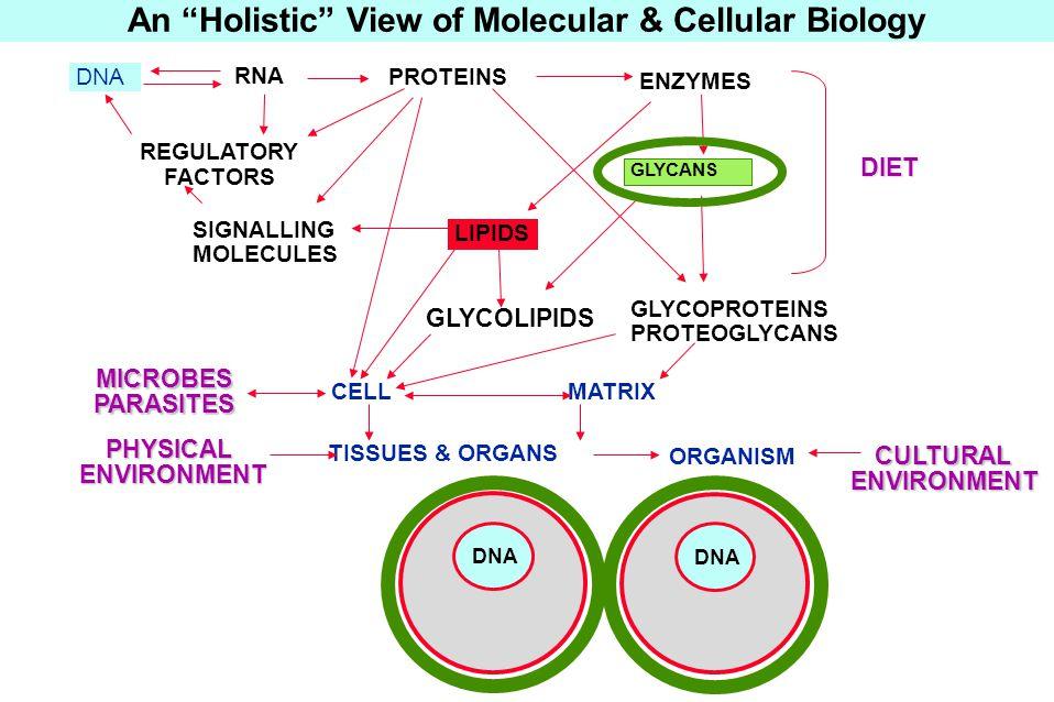 An Holistic View of Molecular & Cellular Biology