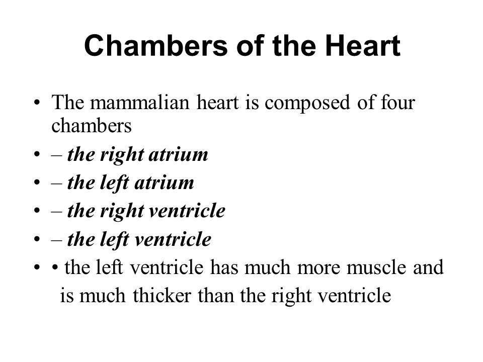 Chambers of the Heart The mammalian heart is composed of four chambers