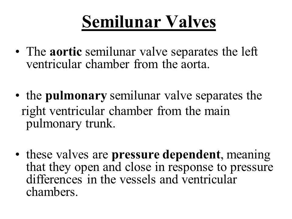 Semilunar Valves The aortic semilunar valve separates the left ventricular chamber from the aorta. the pulmonary semilunar valve separates the.