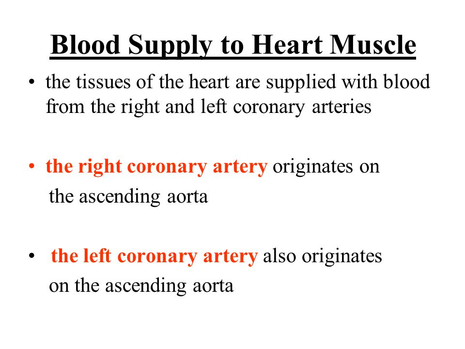 Blood Supply to Heart Muscle