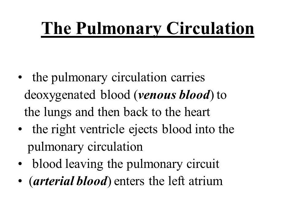 The Pulmonary Circulation