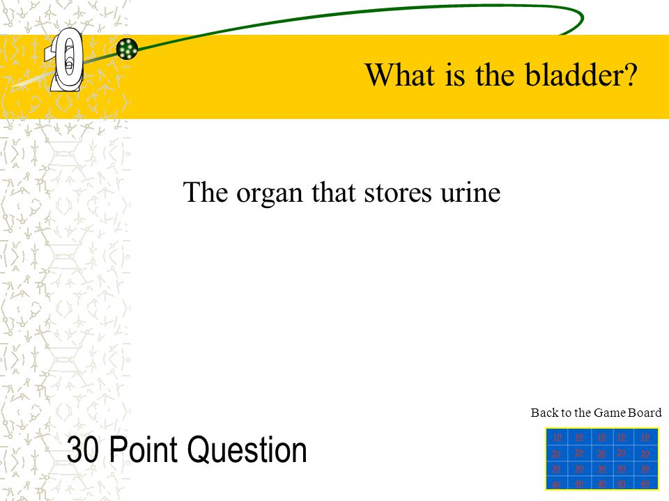 The organ that stores urine