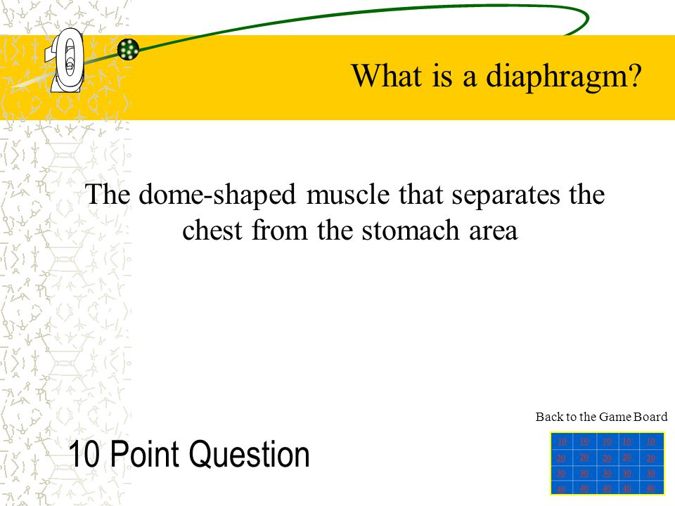 The dome-shaped muscle that separates the chest from the stomach area