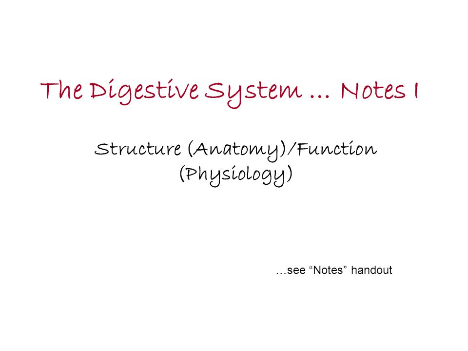 The Digestive System … Notes I - ppt video online download