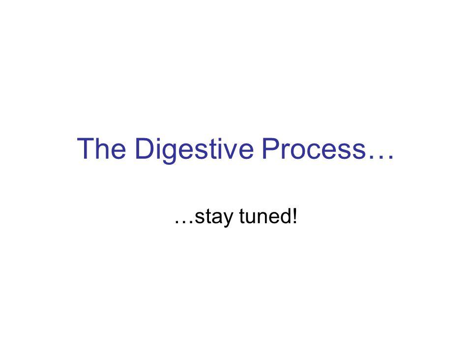 The Digestive Process…