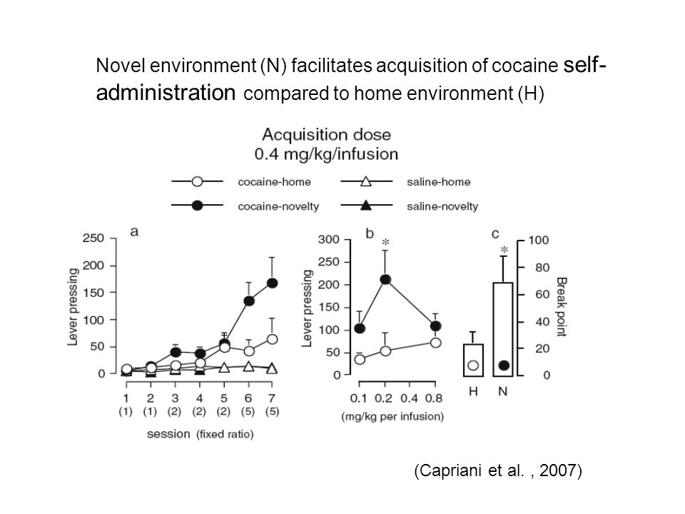 Novel environment (N) facilitates acquisition of cocaine self-administration compared to home environment (H)