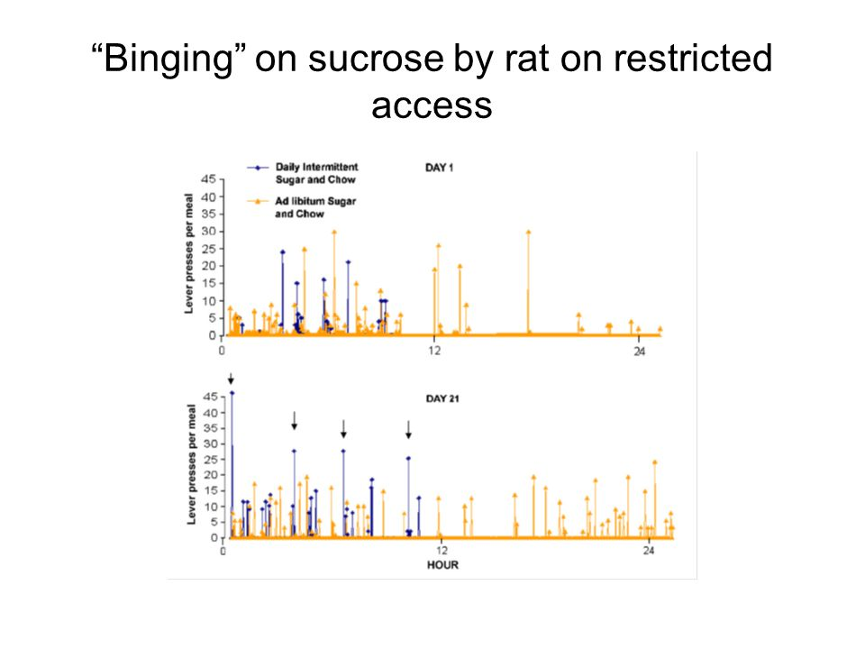 Binging on sucrose by rat on restricted access