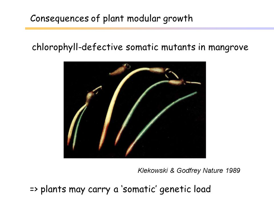 Consequences of plant modular growth