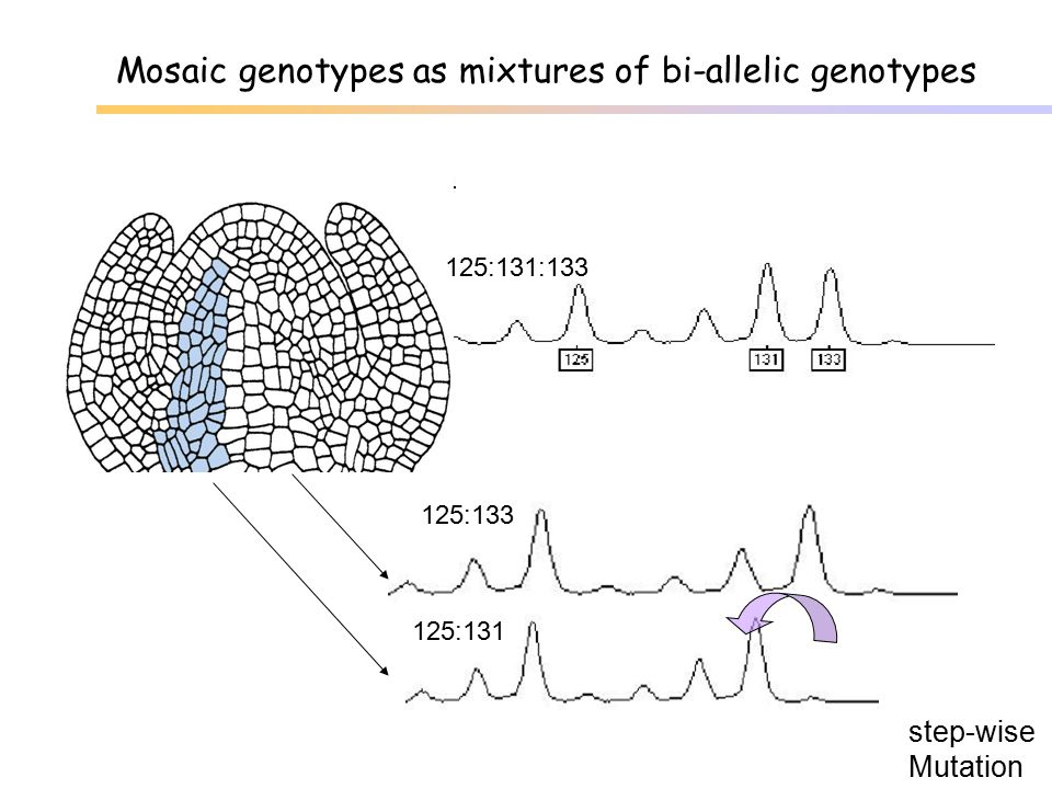 Mosaic genotypes as mixtures of bi-allelic genotypes