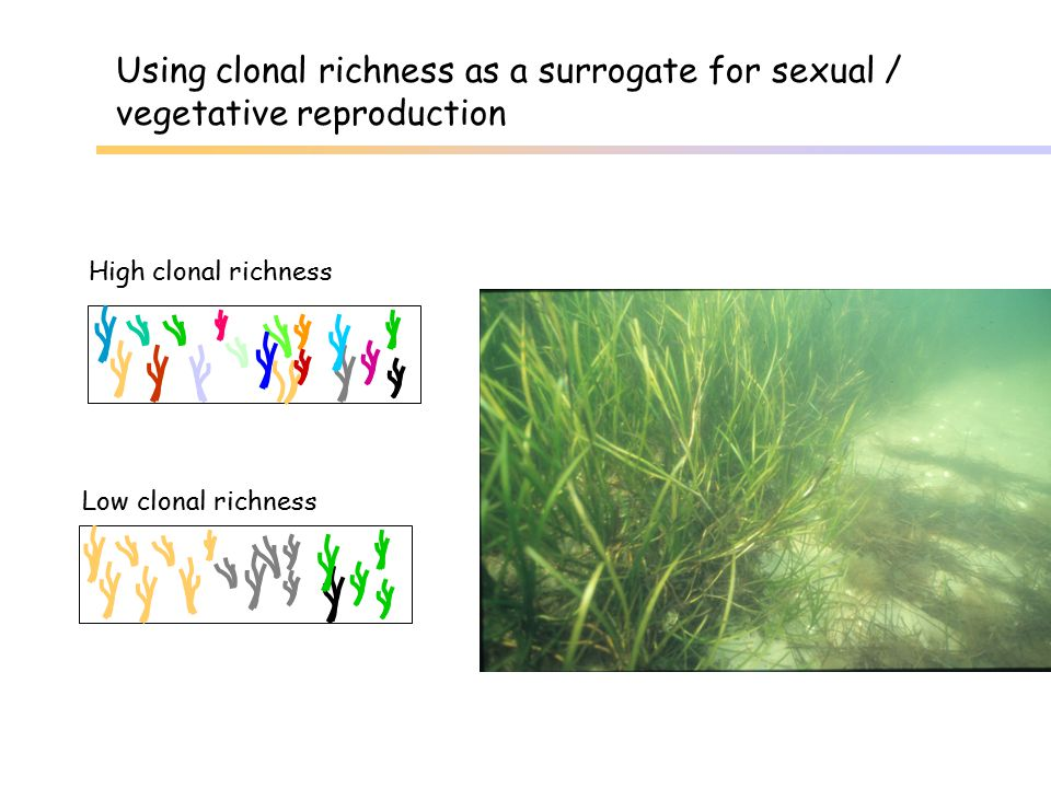 Using clonal richness as a surrogate for sexual /
