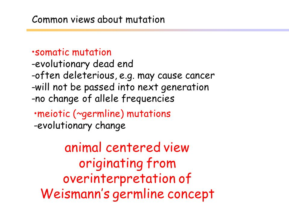 Common views about mutation