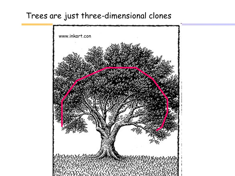 Trees are just three-dimensional clones