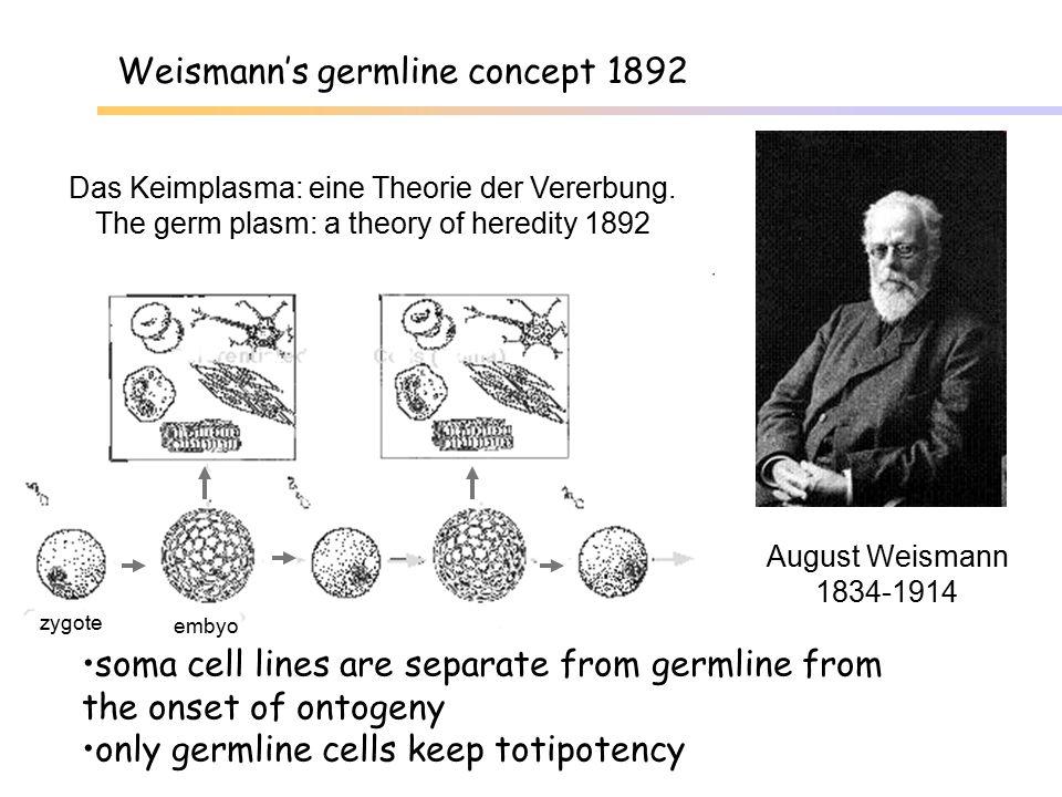 Weismann's germline concept 1892
