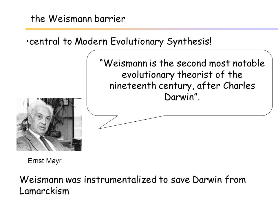 central to Modern Evolutionary Synthesis!