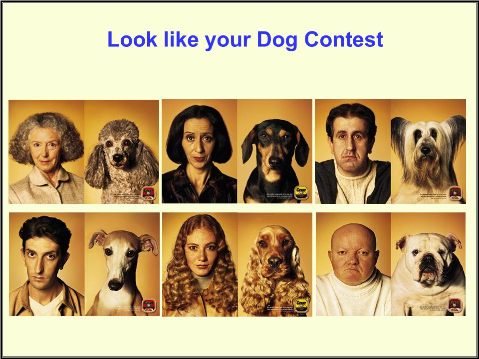 Look like your Dog Contest