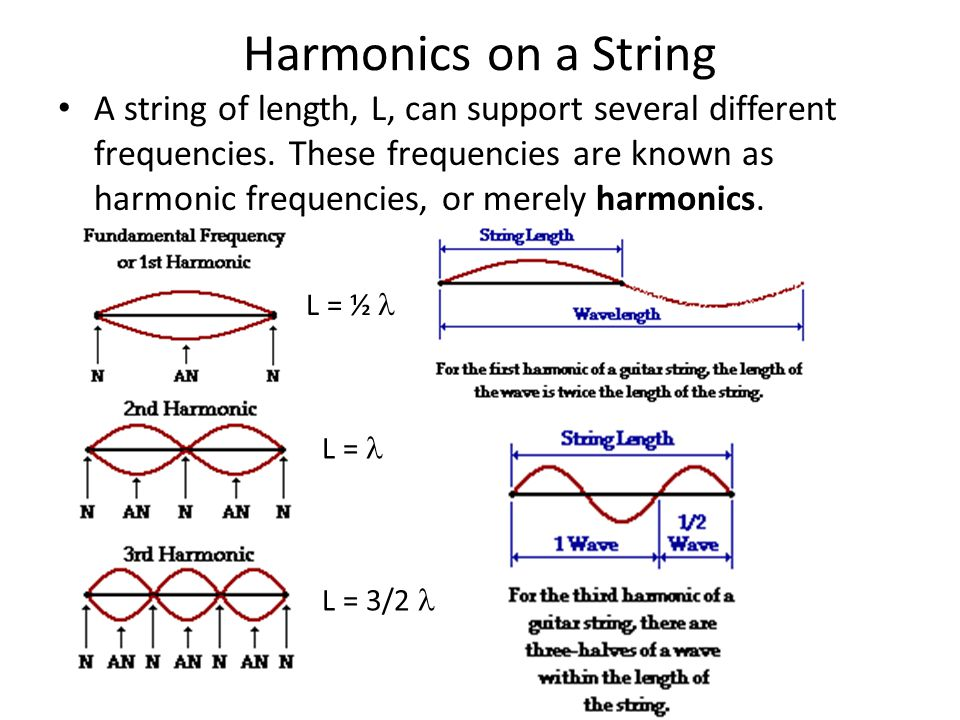 Harmonics on a String