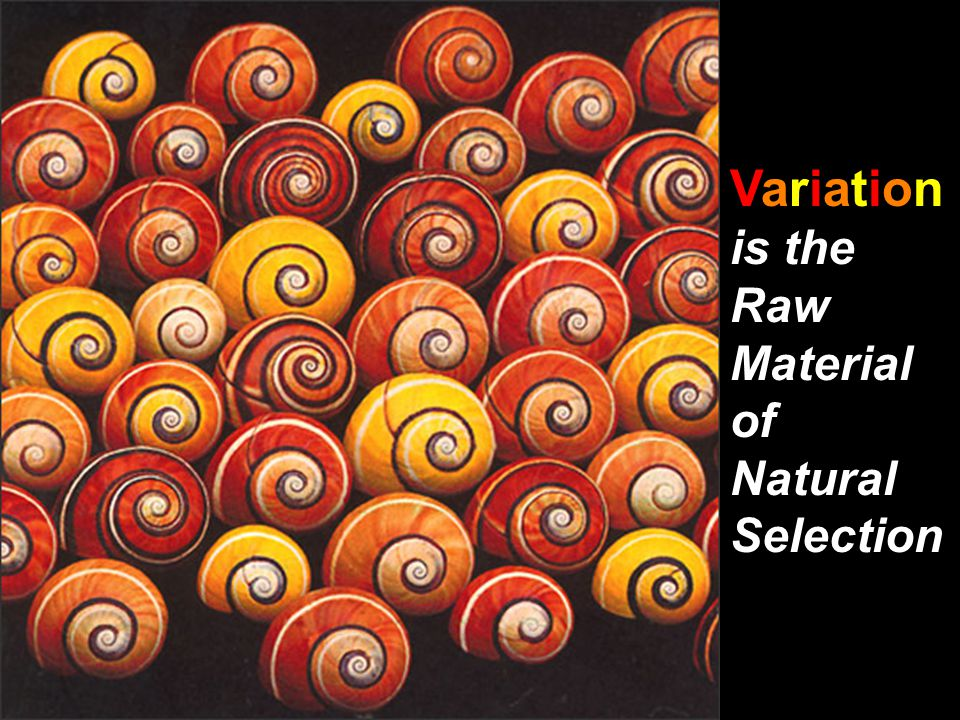 Variation is the Raw Material of Natural Selection