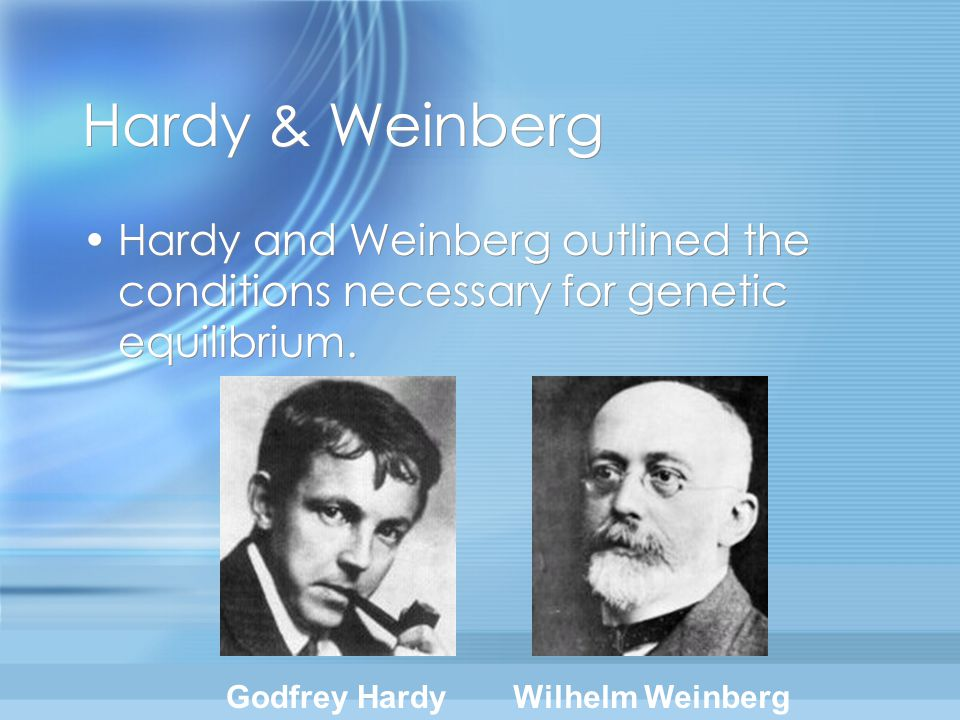 Hardy & Weinberg Hardy and Weinberg outlined the conditions necessary for genetic equilibrium. Godfrey Hardy.