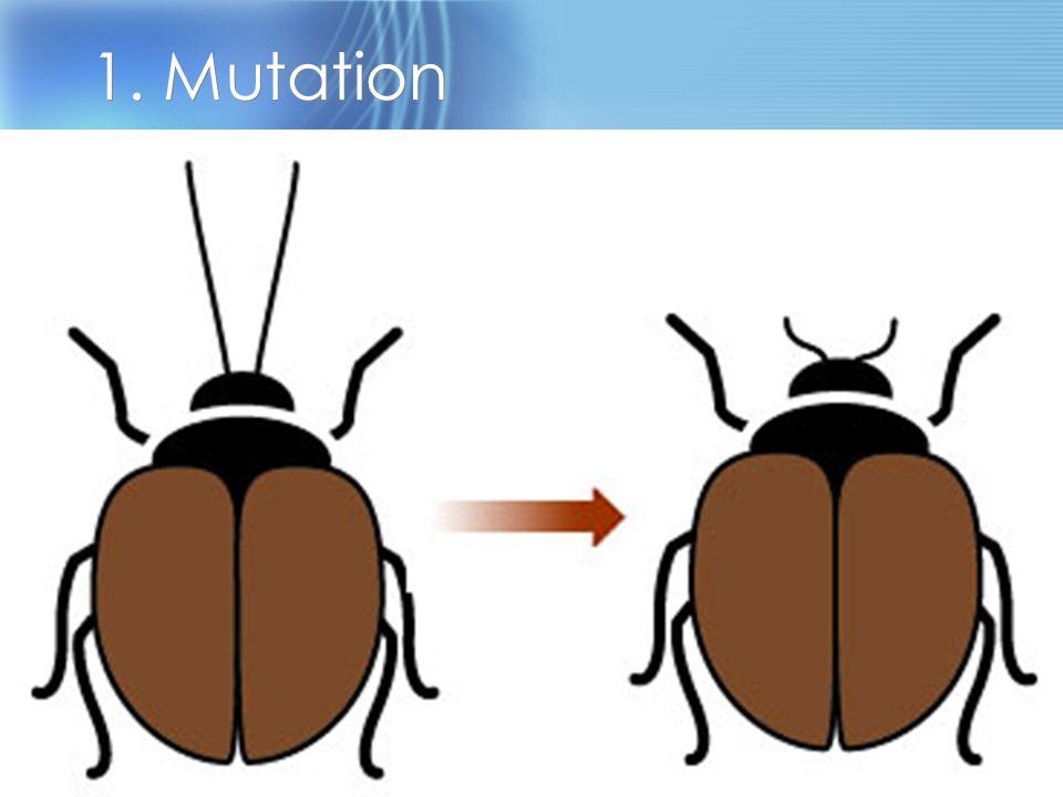 1. Mutation