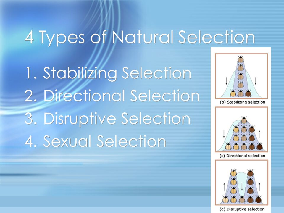 4 Types of Natural Selection