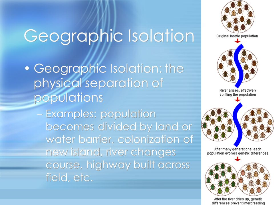 Geographic Isolation Geographic Isolation: the physical separation of populations.