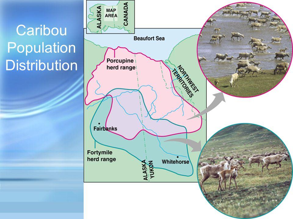 Caribou Population Distribution