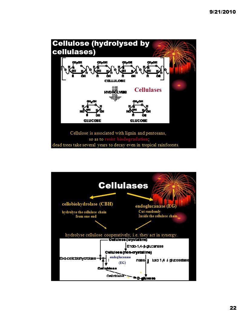 Cellulose (hydrolysed by cellulases)