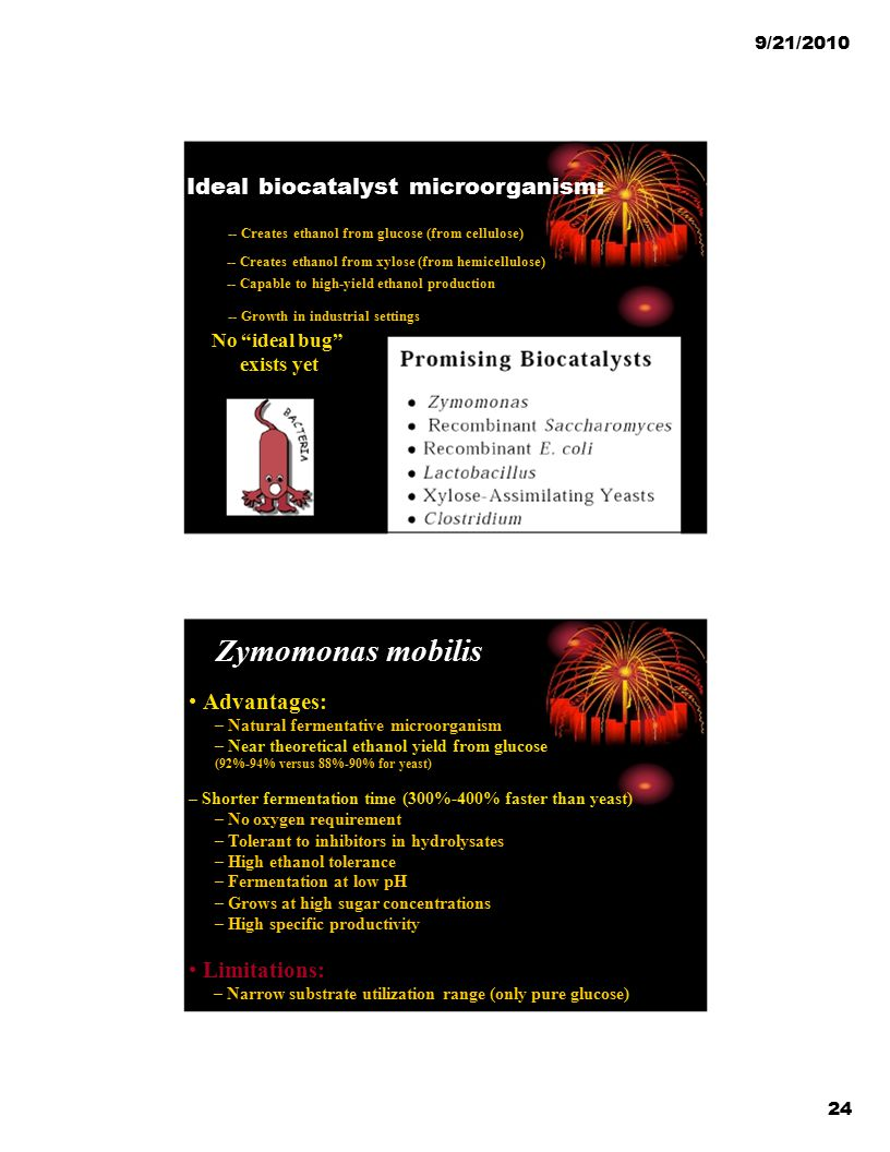 Zymomonas mobilis Ideal biocatalyst microorganism: • Advantages: