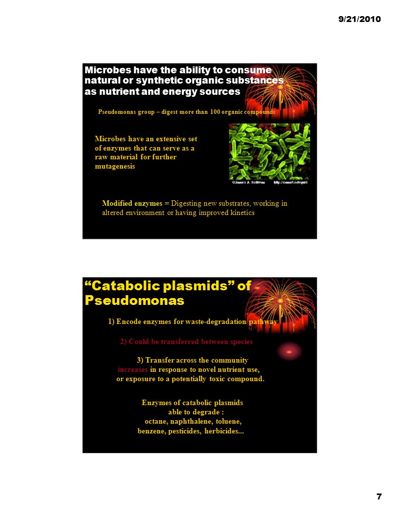 Catabolic plasmids of Pseudomonas